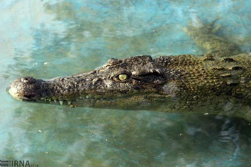 خبرنگاران برکه های زیست تمساح در منطقه حفاظت شده گاندو سرباز پایش شد