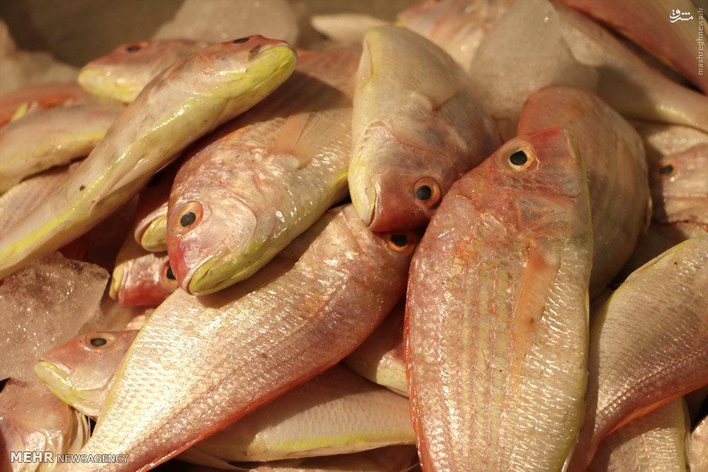 ماهی شب عید گران نمی گردد