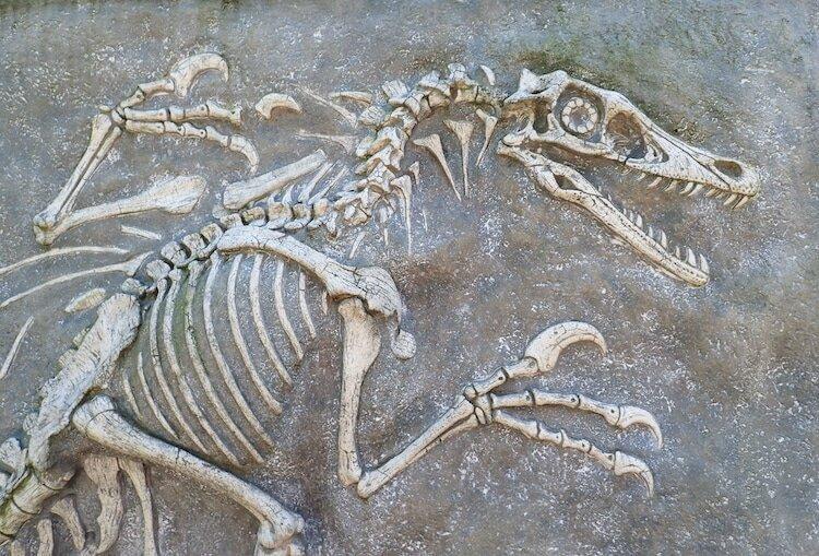 چه دایناسورهایی در ایران بوده اند؟ ، دایناسورها کجا پرسه می زدند؟