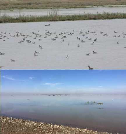 احیاء 750000 هزار متر مربع از اراضی تالاب اله آباد آبیک